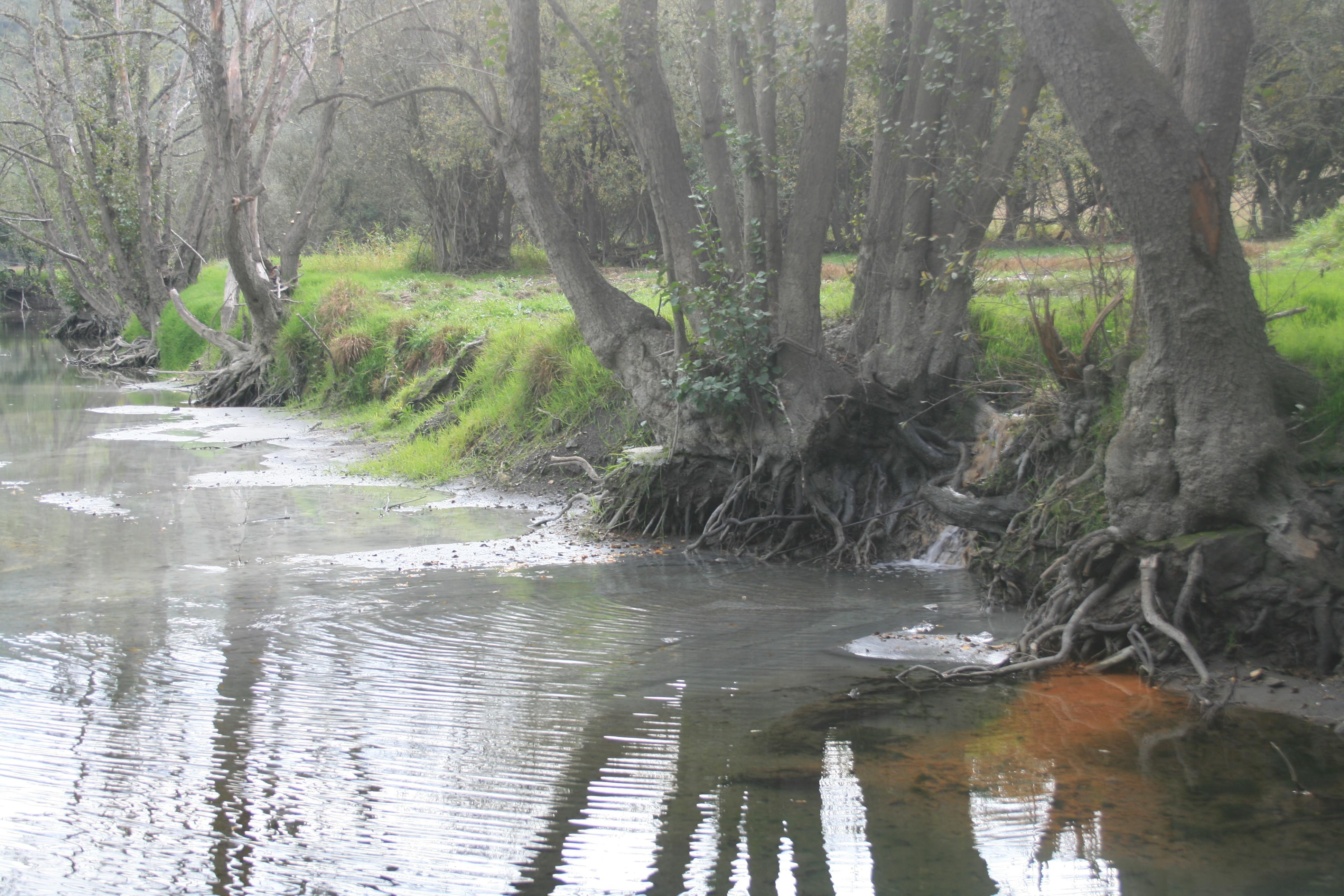 O regato Valcovo desembocando no Camba
