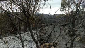 Foto do resultado dos lumes na zona de Palmés, Concello de Ourense