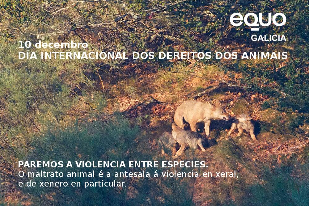 Iberian_Wolf_1_q