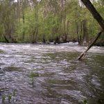EQUO Galicia presentan un recurso de reposición contra o acordo do Concello de Lugo polo que se dá vía libre a novas construcións nas proximidades do río Miño ao amparo da  estratexia DUSI