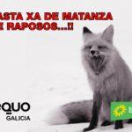 Non á matanza de raposos…!!