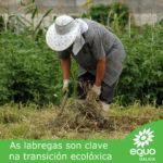 EQUO Galicia esixe a reapertura dos mercados de proximidade non sedentarios