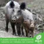 EQUO Galicia esixe á Xunta os informes técnicos nos que se basea a autorización da caza do xabarín durante o estado de alarma
