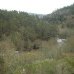 Urxen outras políticas forestais para evitar os grandes incendios en Galicia